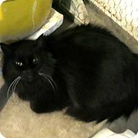 Adopt A Pet :: Demon - Geneseo, IL