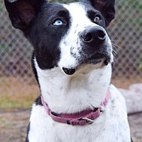 Adopt A Pet :: Neida (Westhampton) - New York, NY