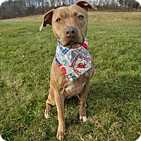 Adopt A Pet :: SANTASIA - New Cumberland, WV