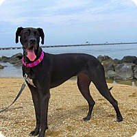 Adopt A Pet :: Lucy - Virginia Beach, VA