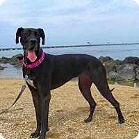 Adopt A Pet :: Lucy - Virginia Beach, VA