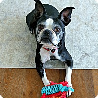 Adopt A Pet :: Fritz! - Redondo Beach, CA