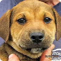 Adopt A Pet :: Melbourne - Germantown, MD