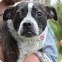 Adopt A Pet :: Lulu - Sparta, NJ