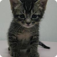 Adopt A Pet :: Koda - Gary, IN