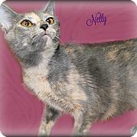 Adopt A Pet :: Nelly - Benton, AR