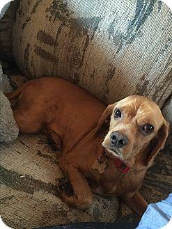 Cocker Spaniel Dog for adoption in Long Beach, California - Enrique