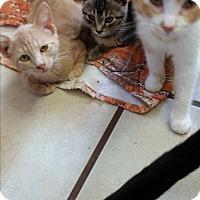 Adopt A Pet :: Kola - Chippewa Falls, WI
