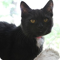 Adopt A Pet :: Aly - Medina, OH
