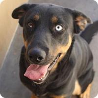 Adopt A Pet :: YANKEE - Red Bluff, CA