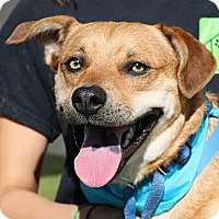 Adopt A Pet :: Churchill - Wenatchee, WA