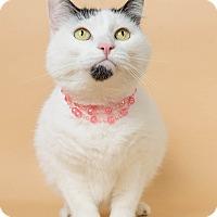 Adopt A Pet :: Panda - Wyandotte, MI