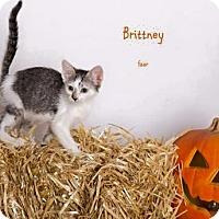Adopt A Pet :: BRITTNEY - Yucca Valley, CA