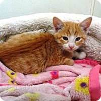 Adopt A Pet :: Kion - Lathrop, CA