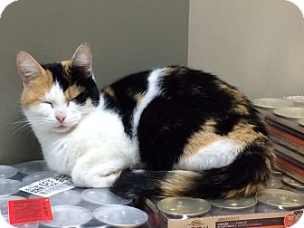 Calico Cat for adoption in Byron Center, Michigan - Furiosa