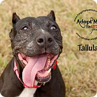 Adopt A Pet :: Tallulah - Pearland, TX
