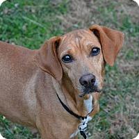 Adopt A Pet :: Ella: Fairfax - Cincinnati, OH