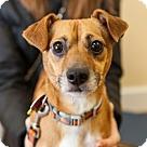 Adopt A Pet :: Chip (Has Application)