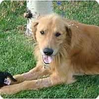 Adopt A Pet :: Jack - Denver, CO