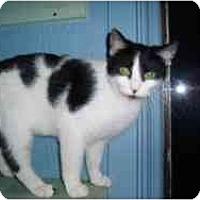 Adopt A Pet :: Erin - Hamburg, NY