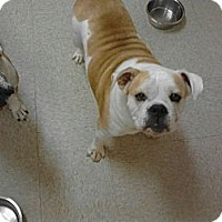 Adopt A Pet :: Tyson - conyers, GA