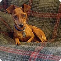 Adopt A Pet :: Max - McDonough, GA