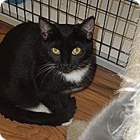 Adopt A Pet :: Audri - Medina, OH