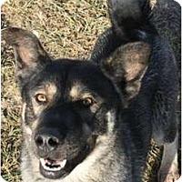 Adopt A Pet :: Anton - Sunnyvale, CA
