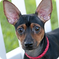 Adopt A Pet :: Lucy - Norwalk, CT