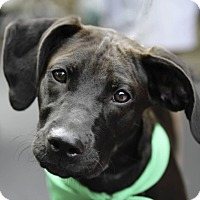 Adopt A Pet :: Bailey - Alpharetta, GA