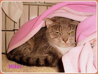 Domestic Shorthair Cat for adoption in Berkeley Springs, West Virginia - Mitzi