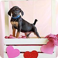 Adopt A Pet :: Elmer - Waldorf, MD