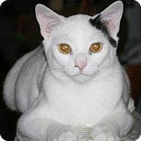 Adopt A Pet :: Towhee - Columbia, SC