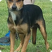 Feist Mix Dog for adoption in Carthage, North Carolina - Lee
