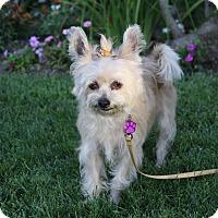 Adopt A Pet :: VIENNA - Newport Beach, CA