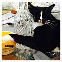 Adopt A Pet :: Grady - Monrovia, CA