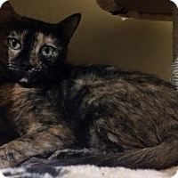 Domestic Shorthair Cat for adoption in Garner, North Carolina - Jade