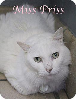 Domestic Mediumhair Cat for adoption in Bradenton, Florida - Miss Priss