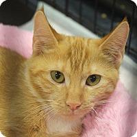 Adopt A Pet :: Devina - Smithtown, NY