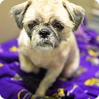 Adopt A Pet :: Bentley - New Orleans, LA