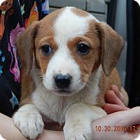 Adopt A Pet :: Zahara (5 lb) Video! - Niagara Falls, NY