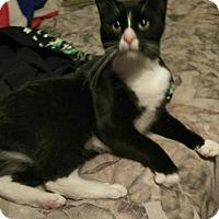 Adopt A Pet :: SHREK - Hampton, VA