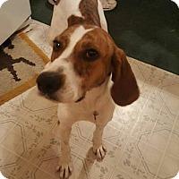 Adopt A Pet :: Powder Puff - Racine, WI