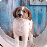 Adopt A Pet :: Elvis - Parsippany, NJ
