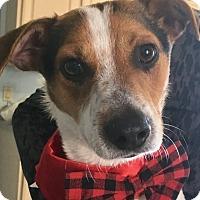 Adopt A Pet :: Jack - Staten Island, NY