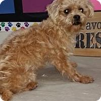 Adopt A Pet :: Wade - Fresno, CA