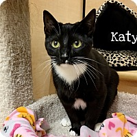 Adopt A Pet :: Katy - Foothill Ranch, CA