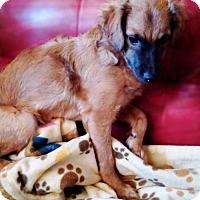 Adopt A Pet :: Thantos - Tucson, AZ