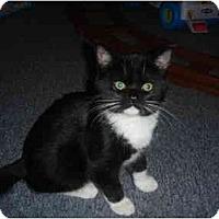 Adopt A Pet :: Moxi - Solon, OH