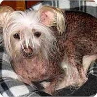 Adopt A Pet :: Ping - Mays Landing, NJ